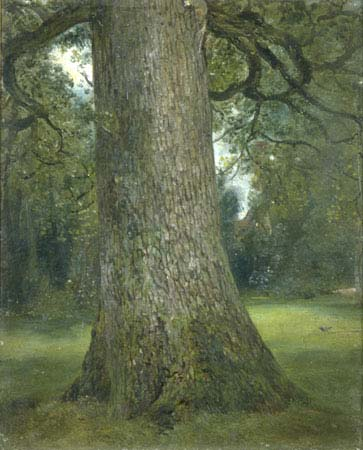 constable, study of the trunk of an elm tree, c.1821, victoria & albert museum, london