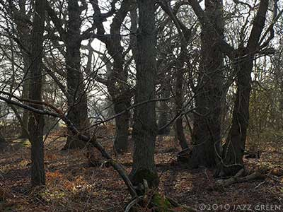 dunwich trees