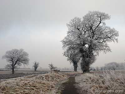hoar FROST fields and trees
