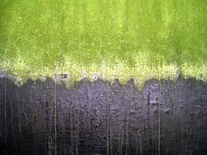minimalist abstract painting - algae, lichen, fungus, green mould