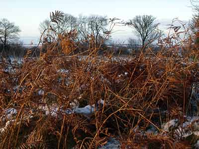 hedgerow in winter with snow