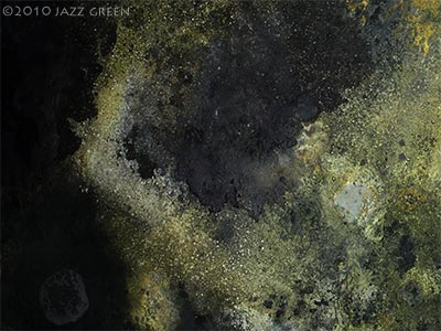 lichenscape by jazz green - detail of surface textures - lichen weathering on walls