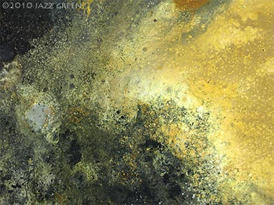 lichenscape by jazz green - detail of surface textures of painting