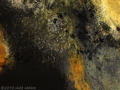 lichenscape by jazz green - surface elements - lichen textures on painting