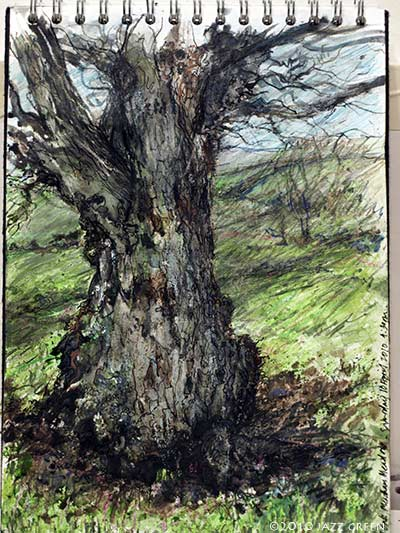 sketchbook, drawing study of an old oak tree