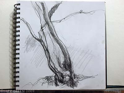 sketchbook drawings - young leaning tree