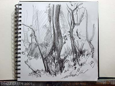 sketchbook drawings - trees and bark in the woods