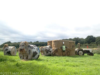 straw-bales-tractor-cows-in-a-field