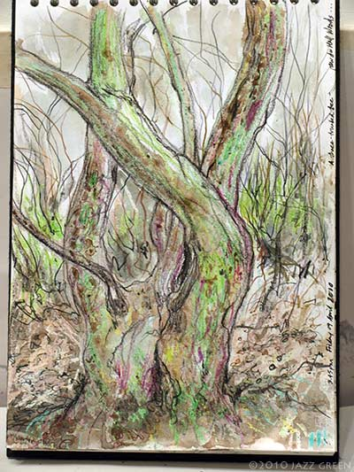 sketchbook, drawing study of tree in woods, jazz green