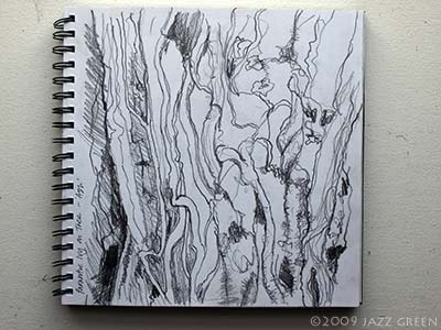 sketchbook drawing of ivy roots on tree trunk