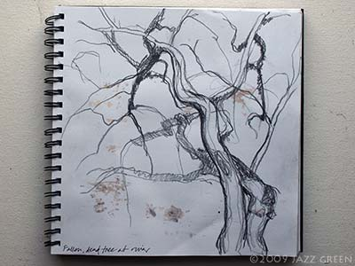 drawing, sketchbook - looking up at tree