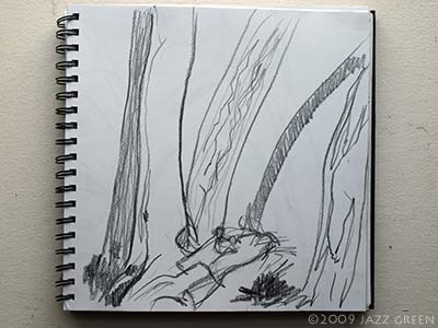 more branches of trees - a drawing in sketchbook