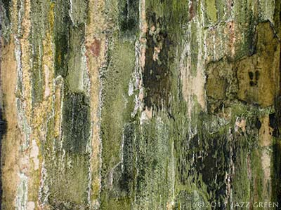 wood shed decay green bark textured abstract painting on panel