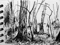 woodland tree studies