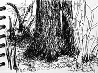 wood tress sketches
