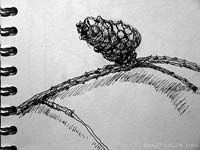 drawing of a pine cone - sketchbook