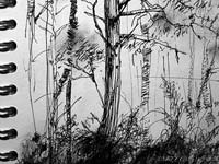 woodland sketch
